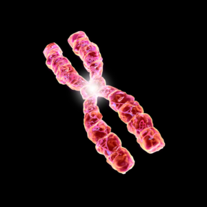 kromozom analizi