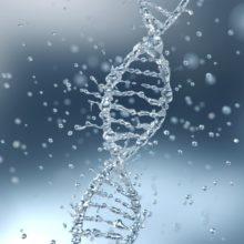 molekuler genetik test